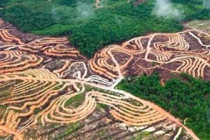 palmolie-industrie