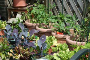 kitchen-garden-255404_640