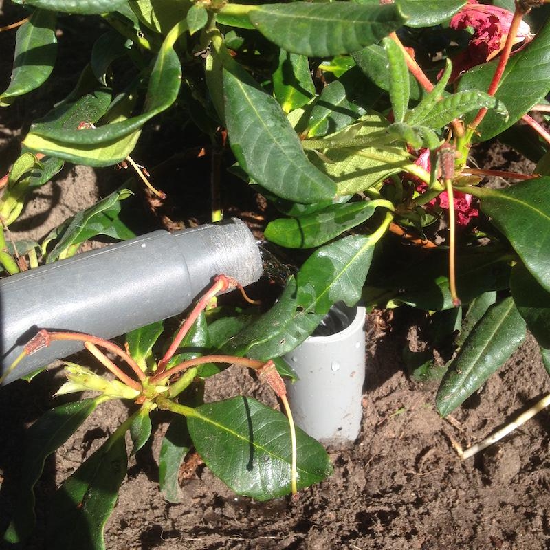 water geven via het pvc buisje aan de rododendron