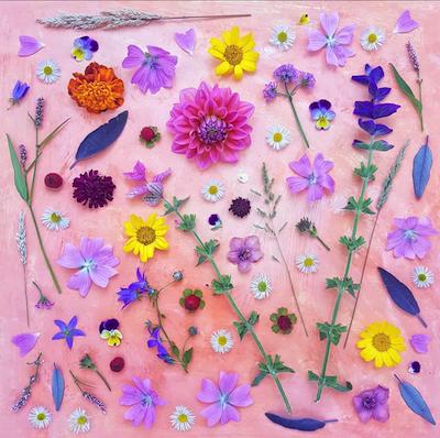 collage paarse bloemen