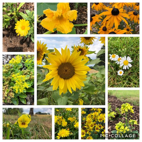 Collage van verschillende bloemen in de kleur geel