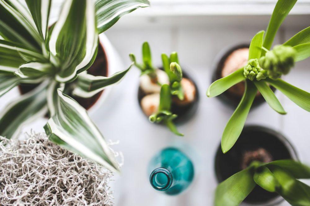 Kamerplanten gezocht