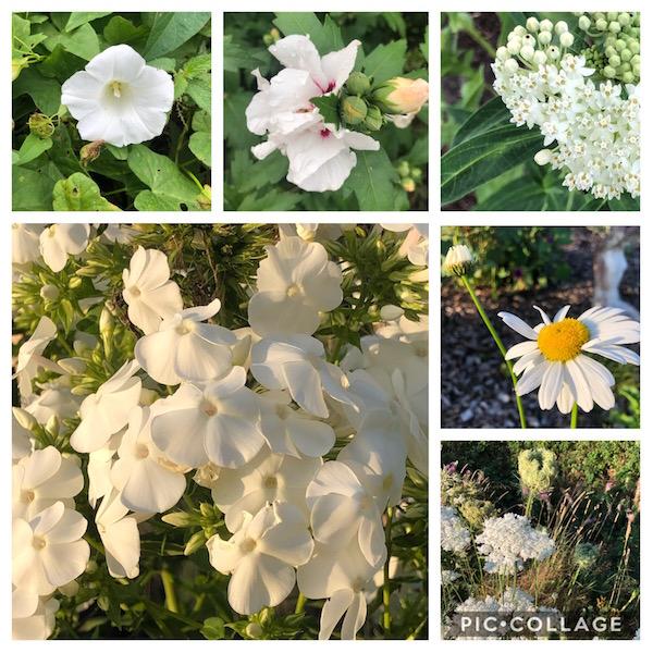 collage van witte bloemen
