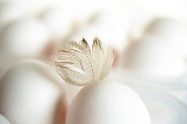 wit ei met een wit veertje
