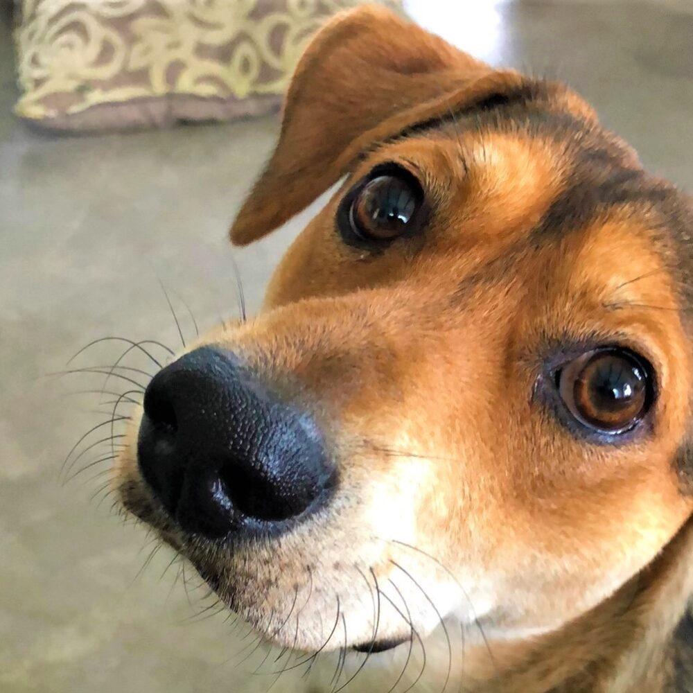 hond kijkt met grote ogen
