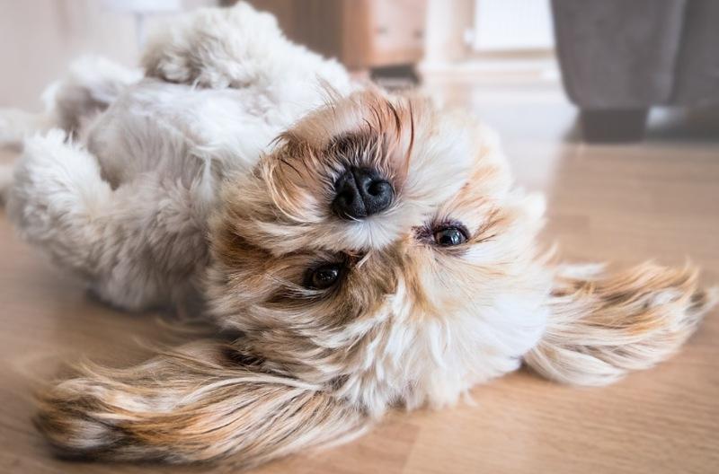 hond op rug op warme vloer